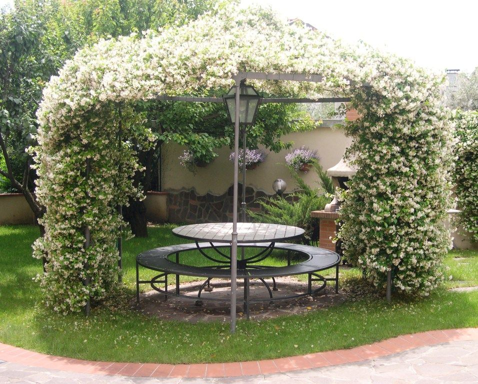 une pergola avec des plantes grimpantes 10 plantes adapt es 20 id es plante grimpante. Black Bedroom Furniture Sets. Home Design Ideas