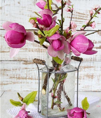 Magnolienblüten - Eindrucksvolle Dekoideen