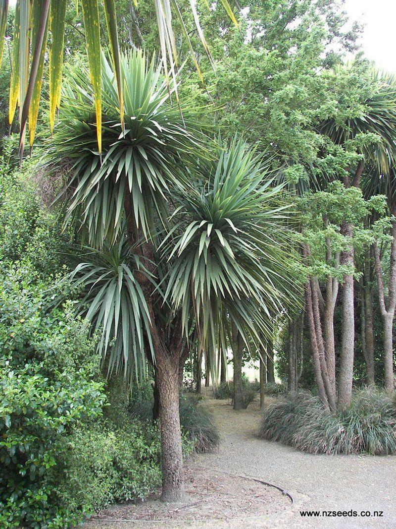 Cordyline Australis In 2020 Tropical Garden Design Tropical Plants Uk Native Garden