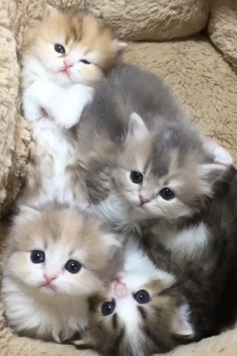 Bob Hairstyles Discover Meow Heart Melting Content In 2020 Cute Baby Cats Cute Cats Funny Cute Cats