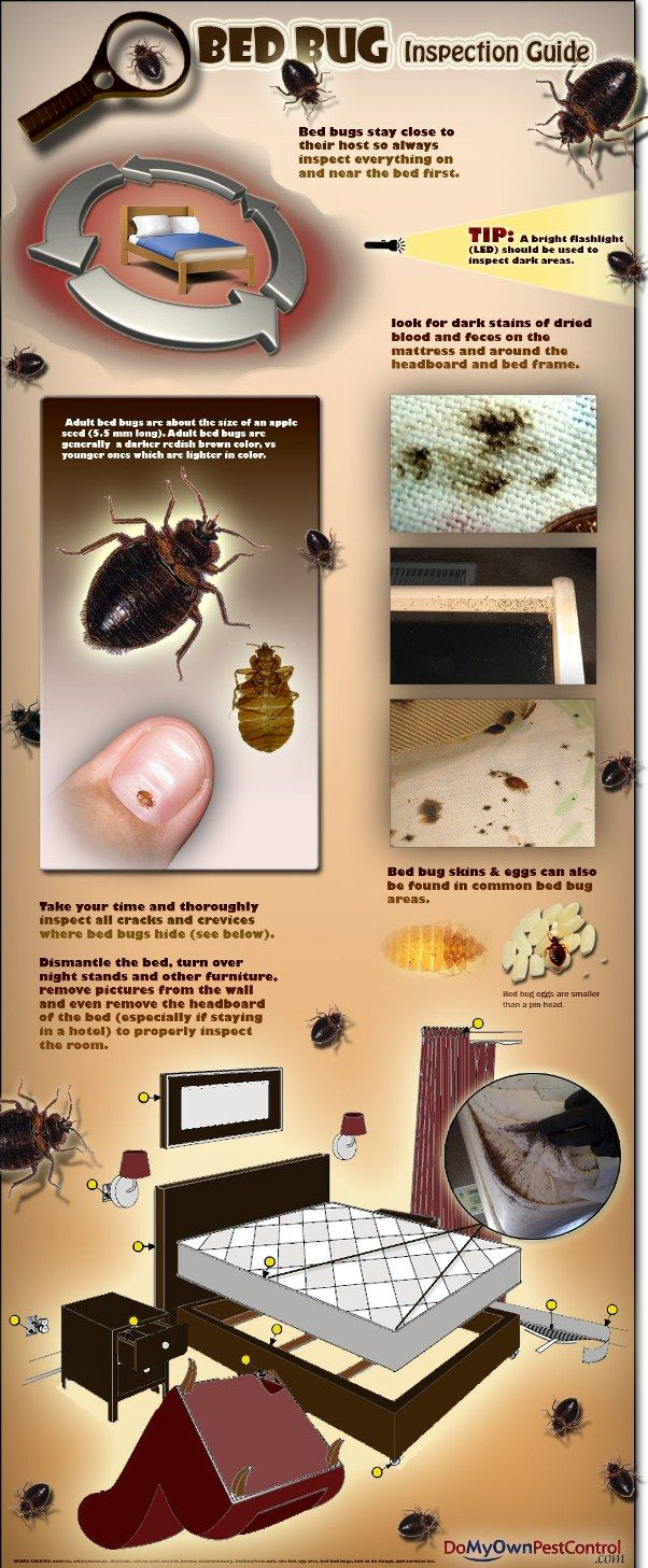 Bed Bug Inspection Guide (infographic) Bed bugs, Bed