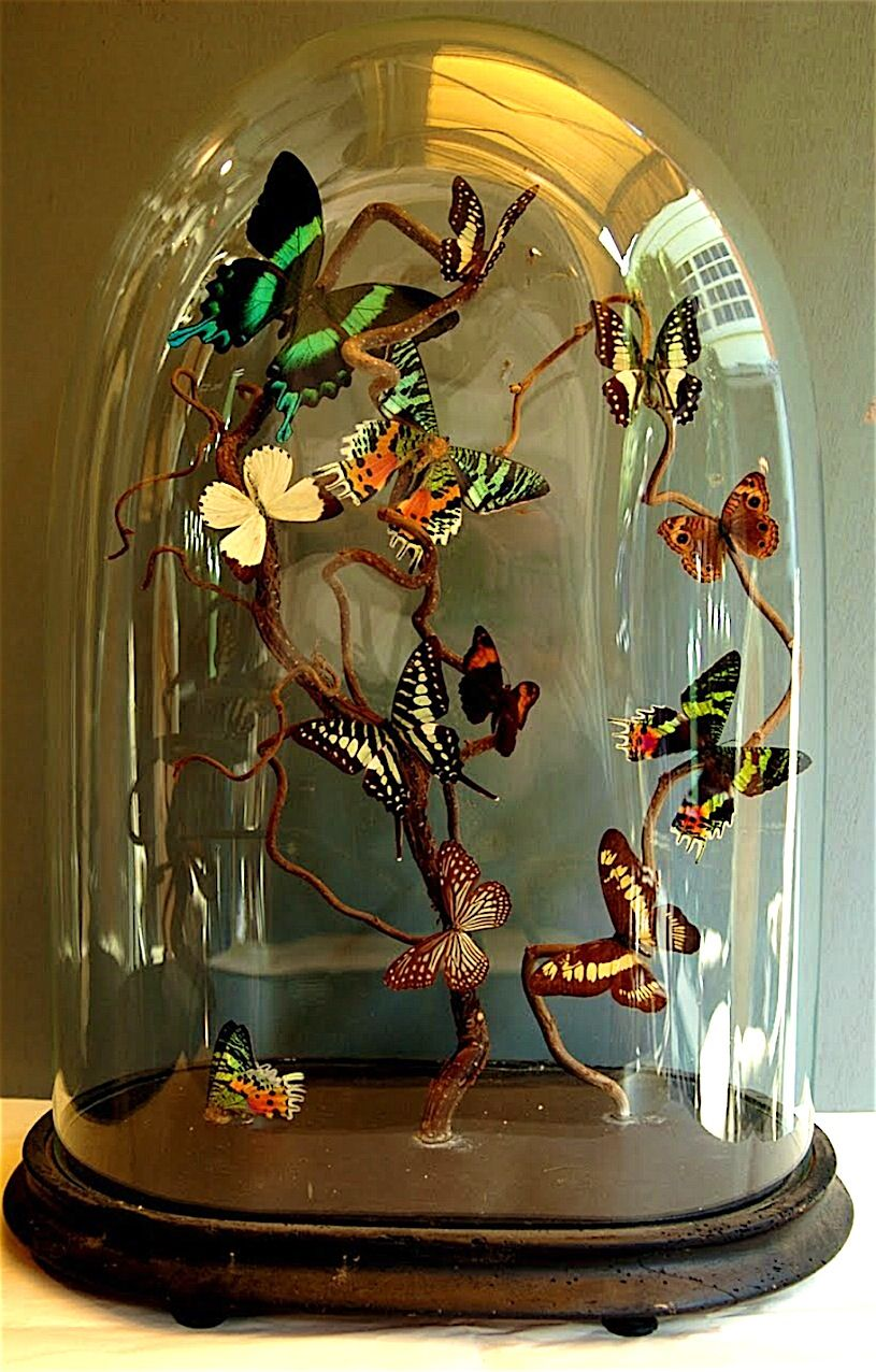 Cabinet de curiosit cloche dome pinterest cabinet de curiosit curiosit s et cloche - Globe cabinet de curiosite ...