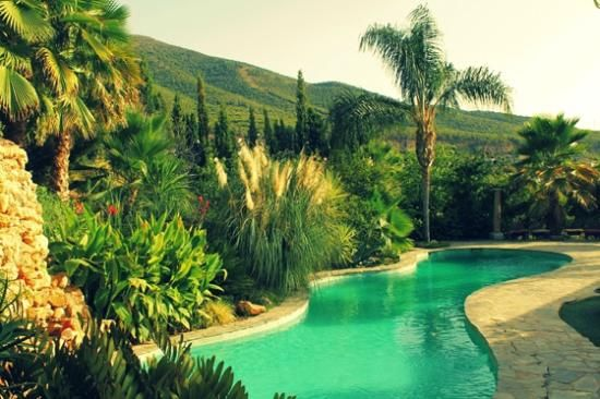 Swimming pool with exotic planting at Casa de Laila Source: tripadvisor