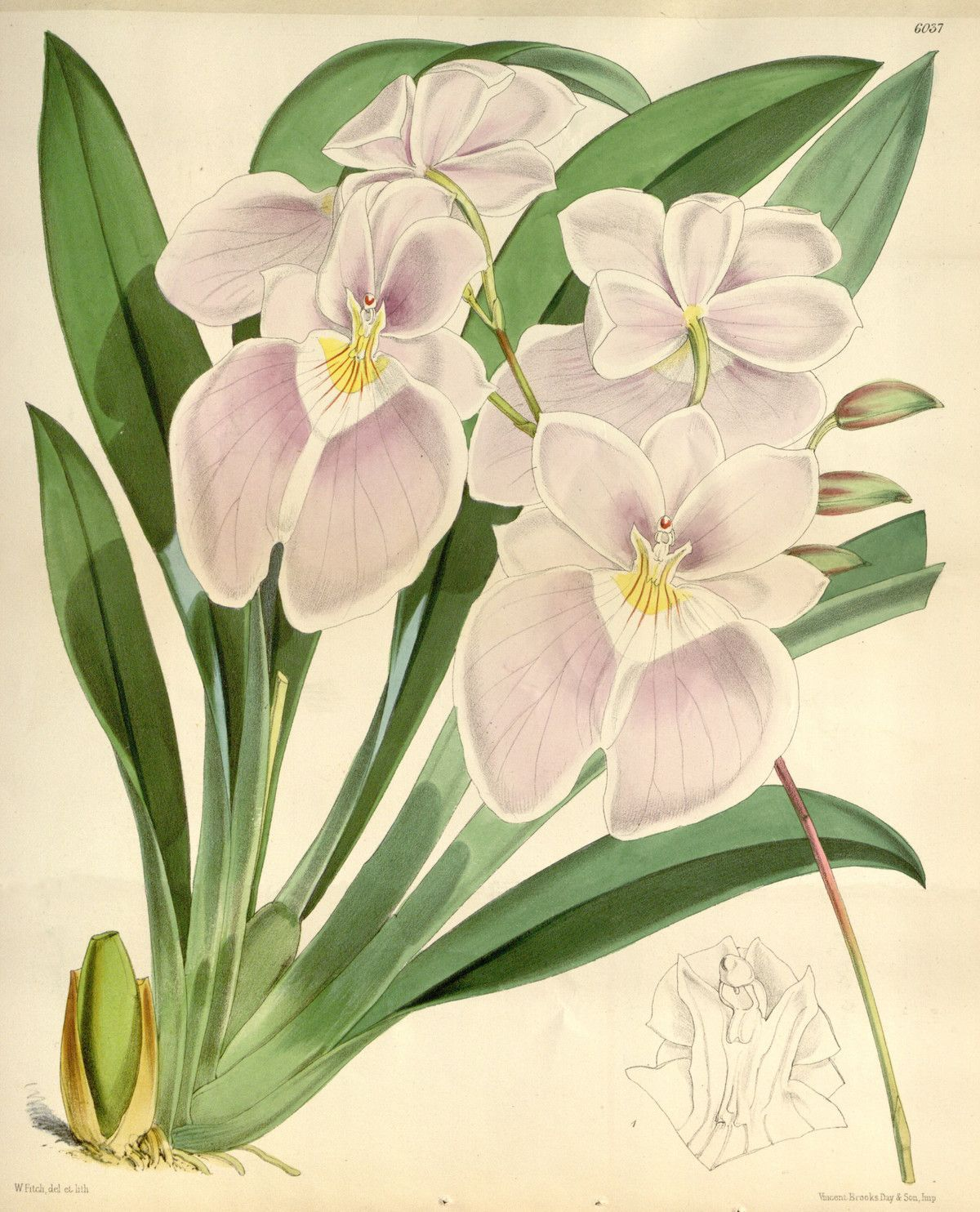 Pink lilliesorchids our posters pinterest products