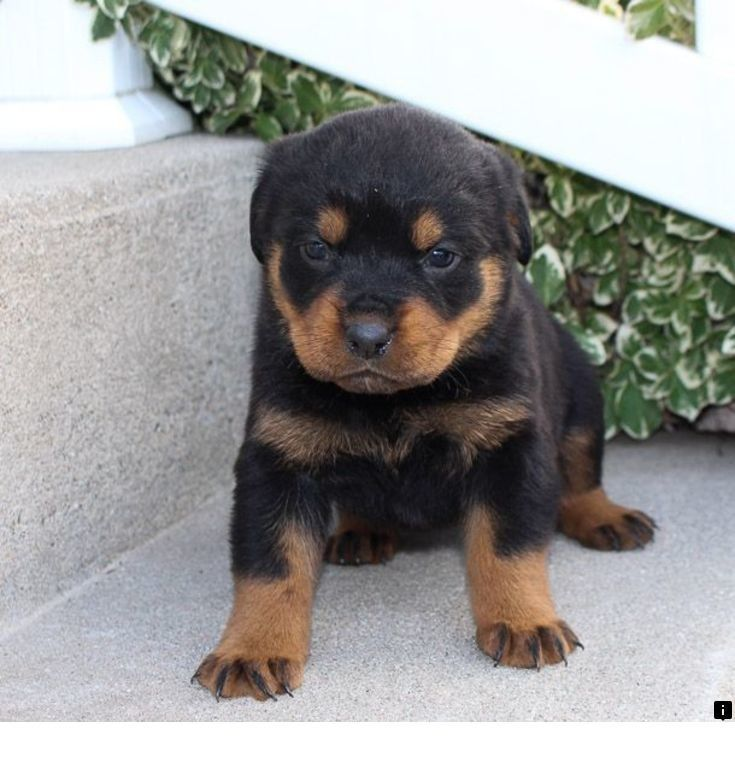 Discover More About Puppies For Adoption Check The Webpage For