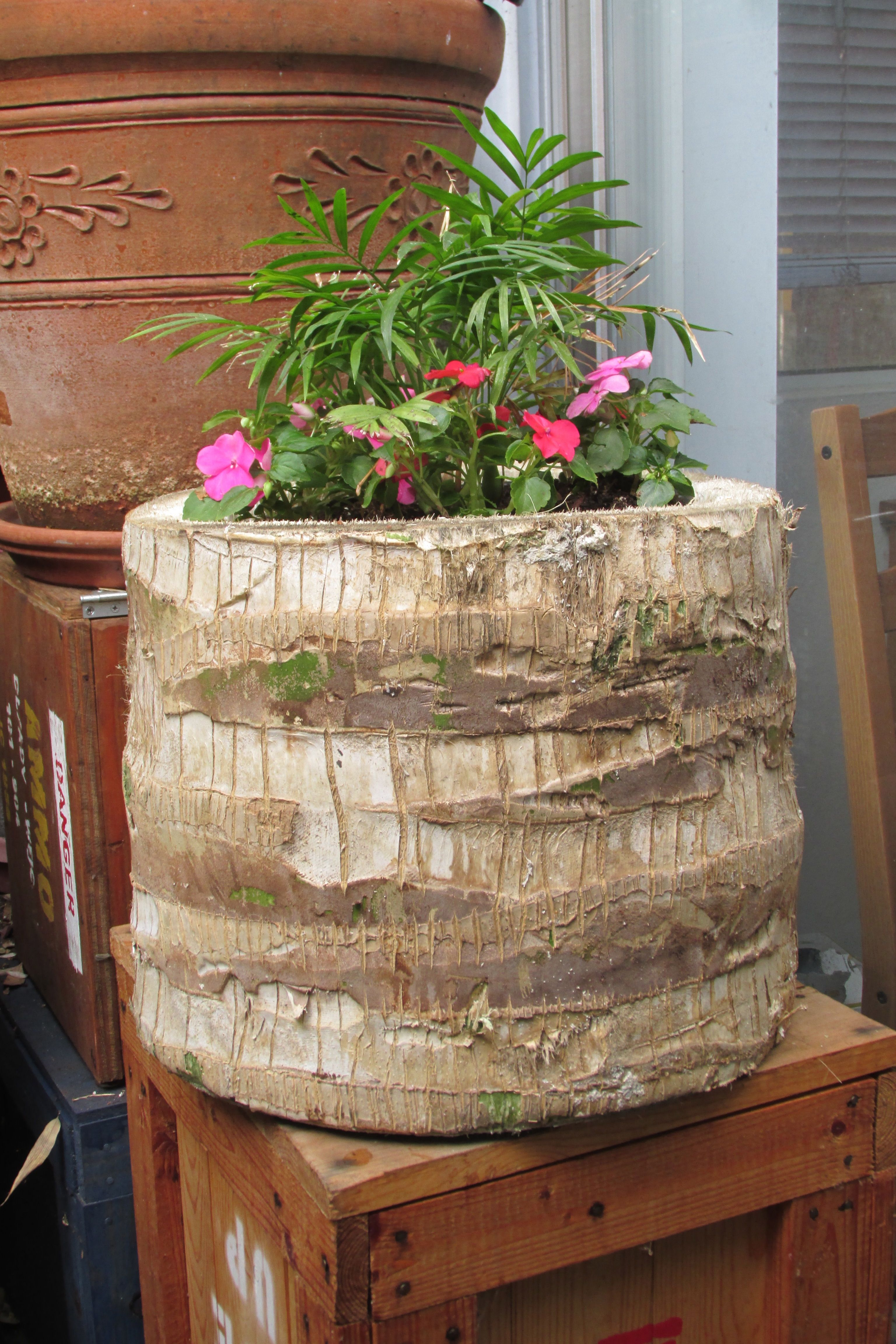 Planter i made out of a palm tree stump repurpose pinterest planter i made out of a palm tree stump reviewsmspy