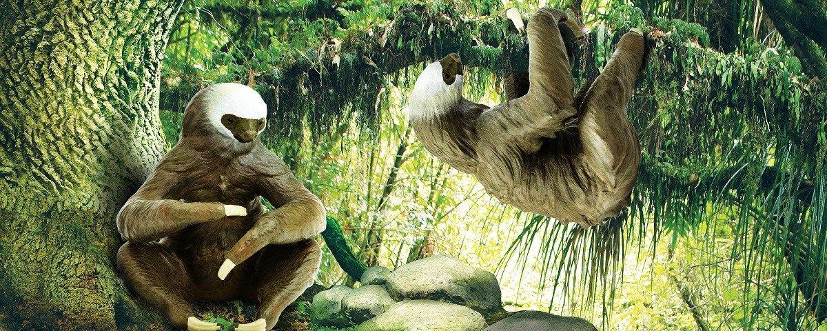 10++ Sloth animal in spanish ideas
