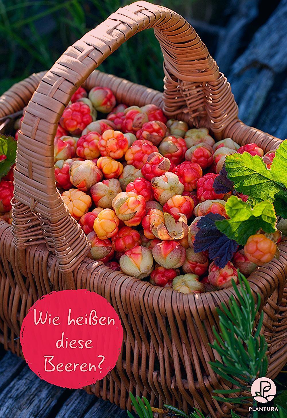 Photo of 9 Beeren, von denen Sie vermutlich noch nie gehört haben – Plantura