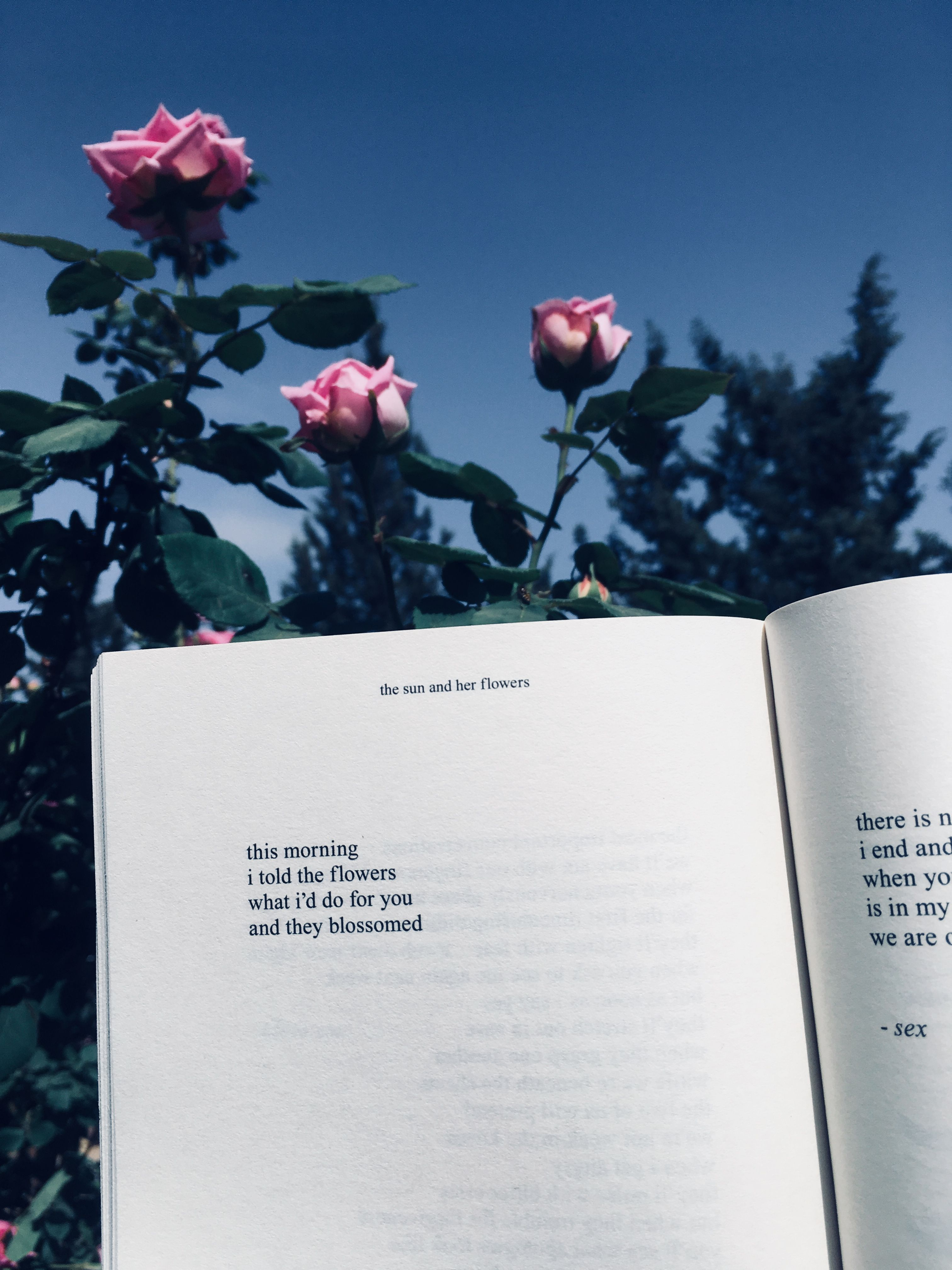 The Sun And Her Flowers Book Photography Instagram Book Aesthetic Book Wallpaper
