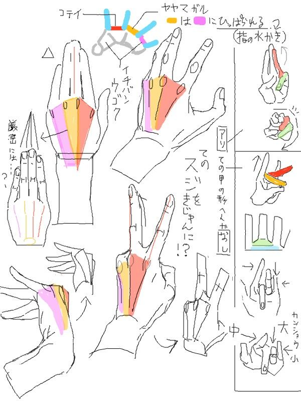 Hands Anatomy How To Draw A Hand Drawing Reference