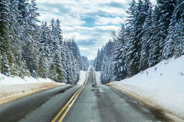Highway 93 Condon MT   MONTANA, Glacier and Yellowstone   Montana