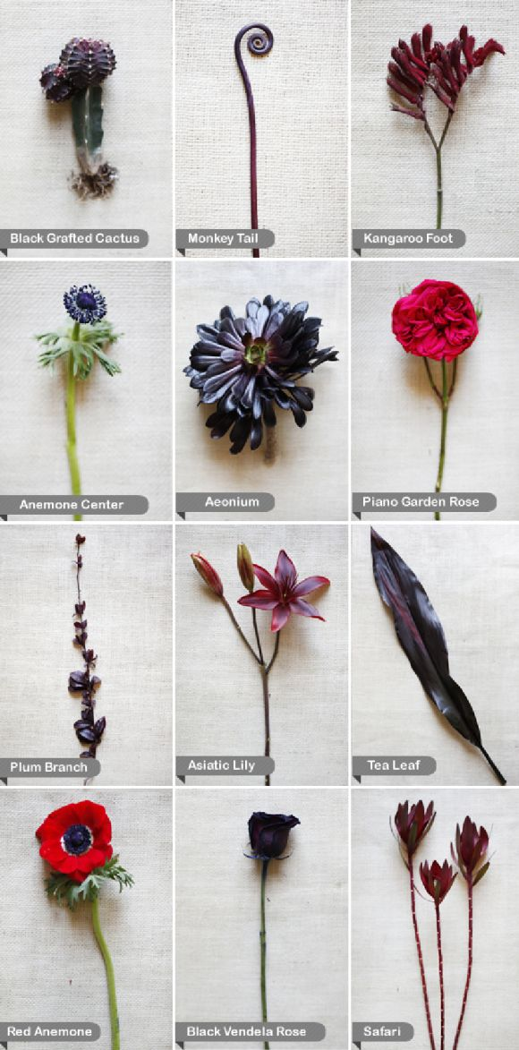 Rose Color Meanings Chart: Black Wedding Flowers, Red