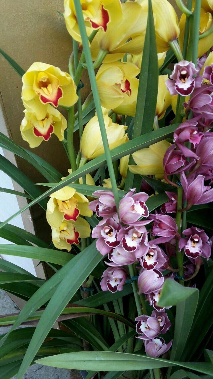 Orchideenpark In Singapur Favorite Flower S Flowers Beautiful Flowers Garden