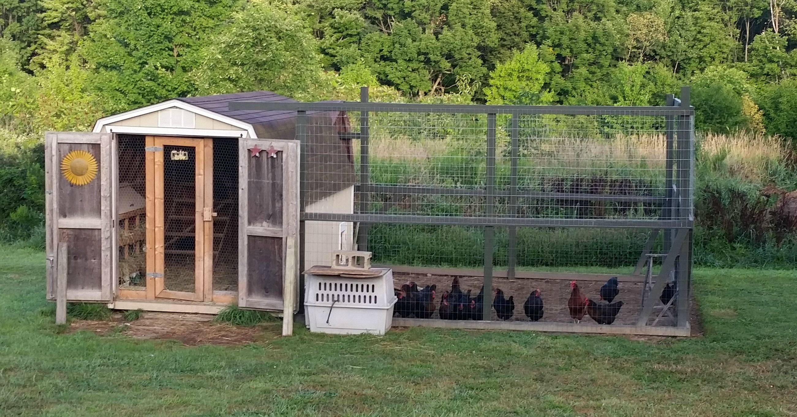 Here Is A Step By Step Guide To Converting A Shed To A Coop Urban Chicken Farming Chickens Backyard Diy Chicken Coop