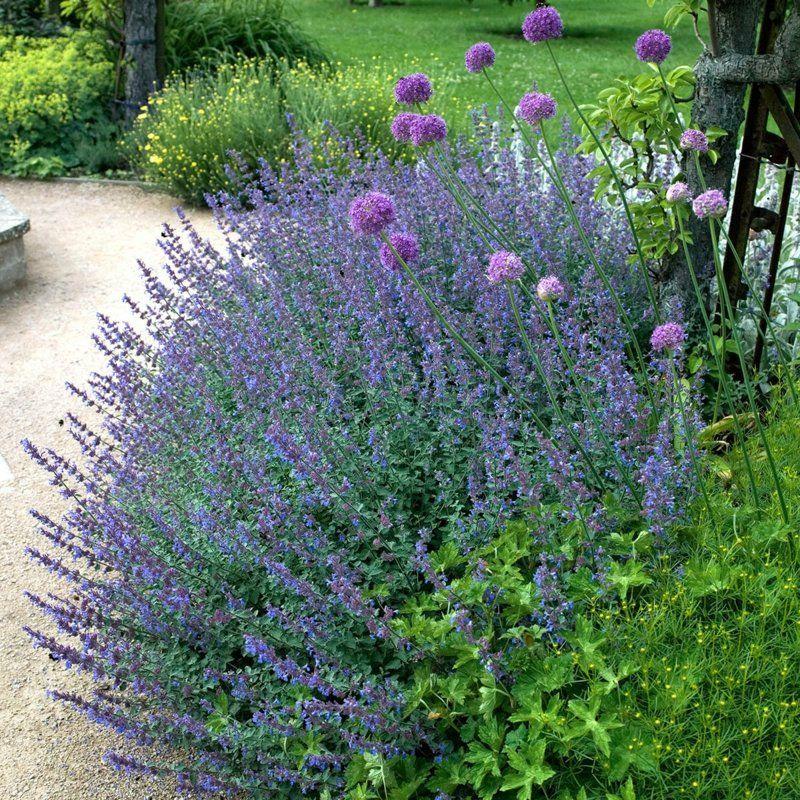 Winterharte Stauden 7 Wunderschone Arten Fur Ihren Garten In 2020 Plants