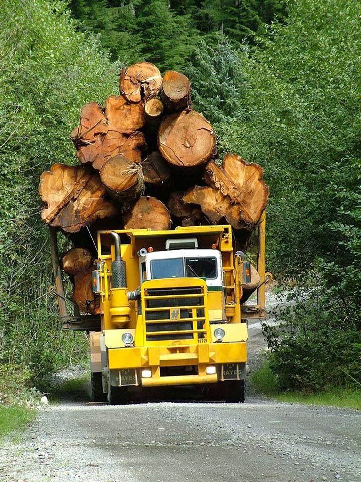 Mengirimkan log kayu