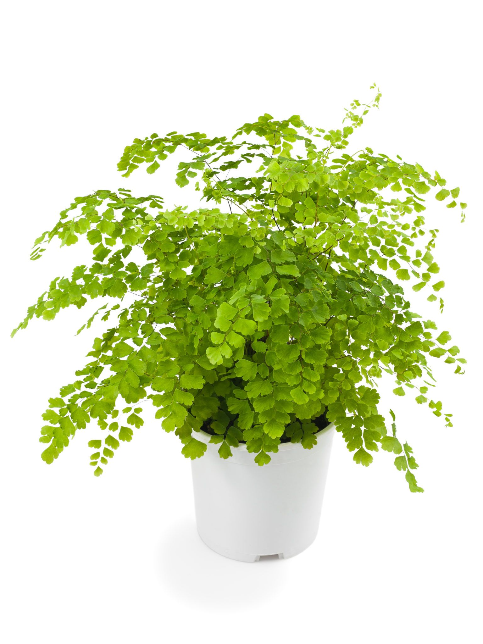 10 Low Light House Plants In 2020 With Images Low 400 x 300