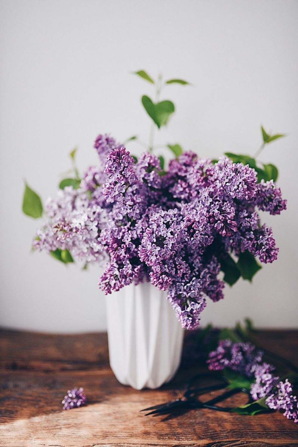 Floralls Lilac By Dominika Brudny In 2020 Lilac Flowers Planting Flowers Flowers Bouquet