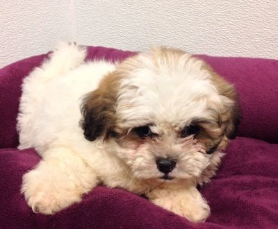 Blog Archives Pets For Sale Puppy Training Puppies