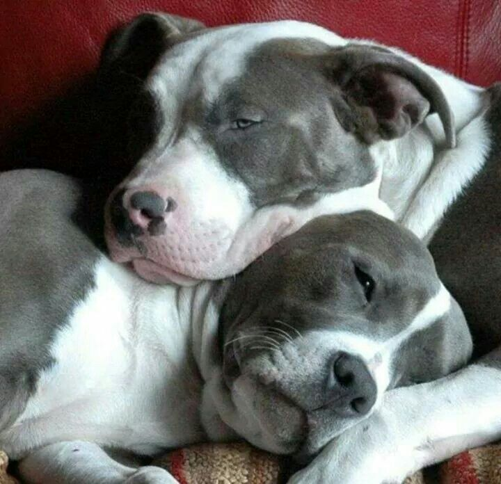 tiere pinterest hunde kleinster hund und tierschutz. Black Bedroom Furniture Sets. Home Design Ideas