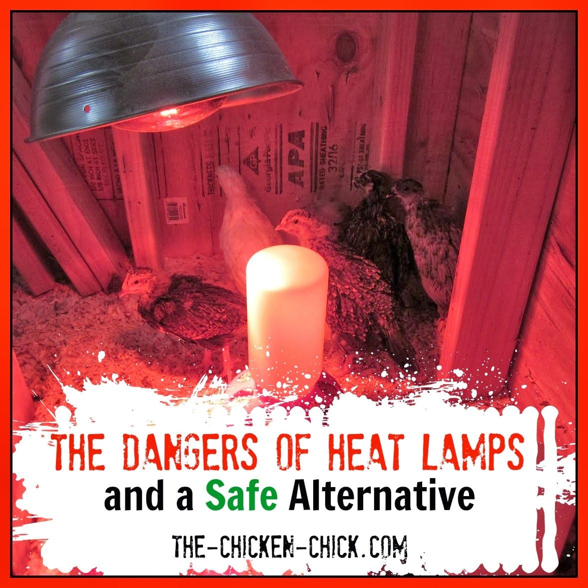 The Dangers Of Brooder Heat Lamps U0026 A Safe Alternative | The Chicken Chick®