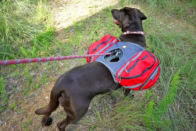 1c3f3edcf292 Hiking with your dog by Brian s Backpacking Blog