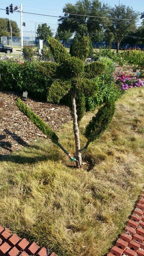 Cedar 'flower'