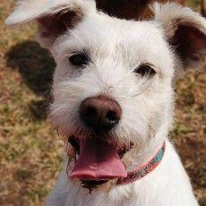 Buck Fund Dog Park In Emporia Ks Dog Friendly Travel Dogs