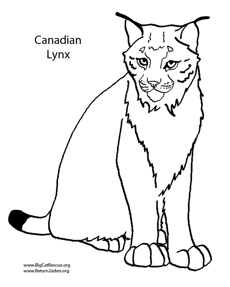 Lynx Coloring Pages Animal Coloring Pages Horse Coloring Pages Dog Coloring Page