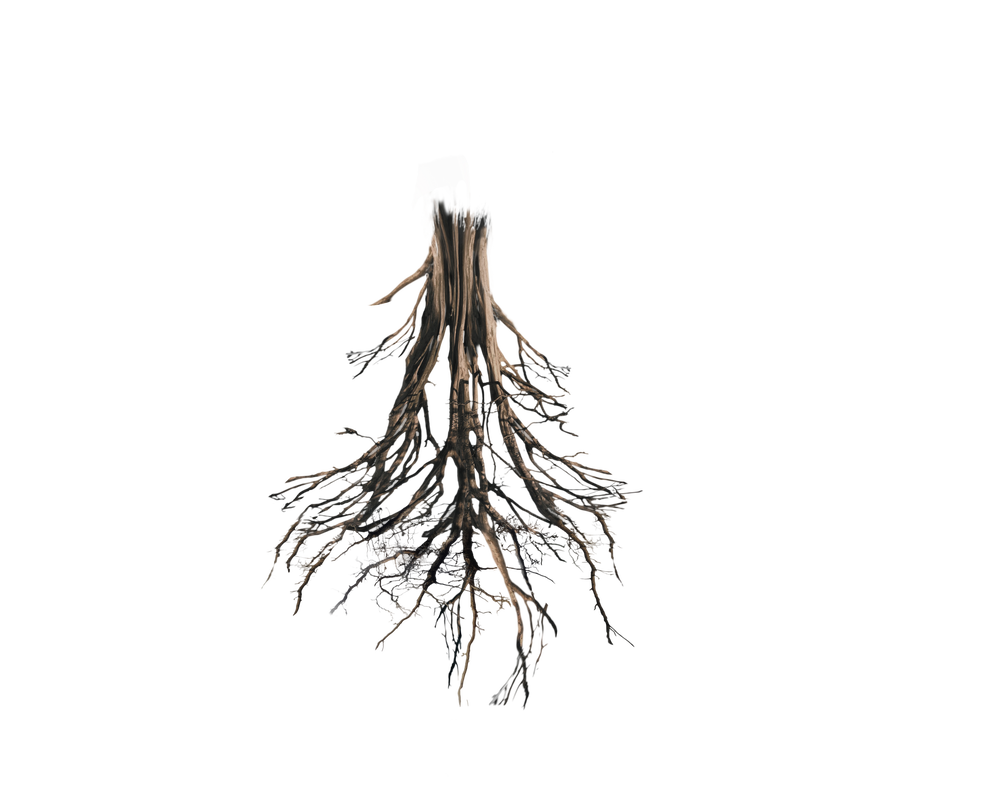 Floating Island Tree Trunk Rework Png Roots By Https Www Deviantart Com Annamae22 On Deviantart Tree Roots Roots Png