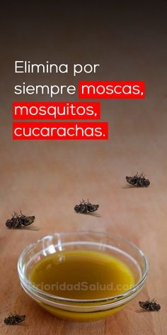 Elimina Las Moscas Cucarachas Y Mosquitos De Tu Casa En Solo 2