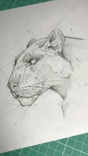 Pantera desenho