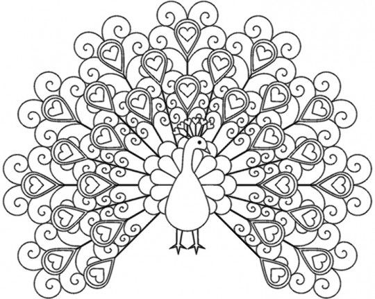 Peacock Coloring Pages For Adults To Print Peacock Coloring