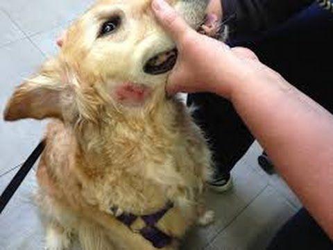 Http Www Veterinarysecrets Com News Dr Jones Shows You The Signs