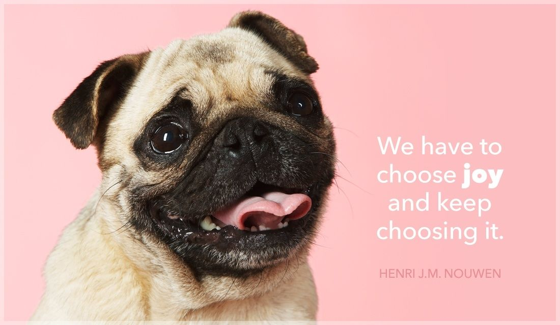 We Have To Choose Joy And Keep Choosing It Pug Names Pug Facts
