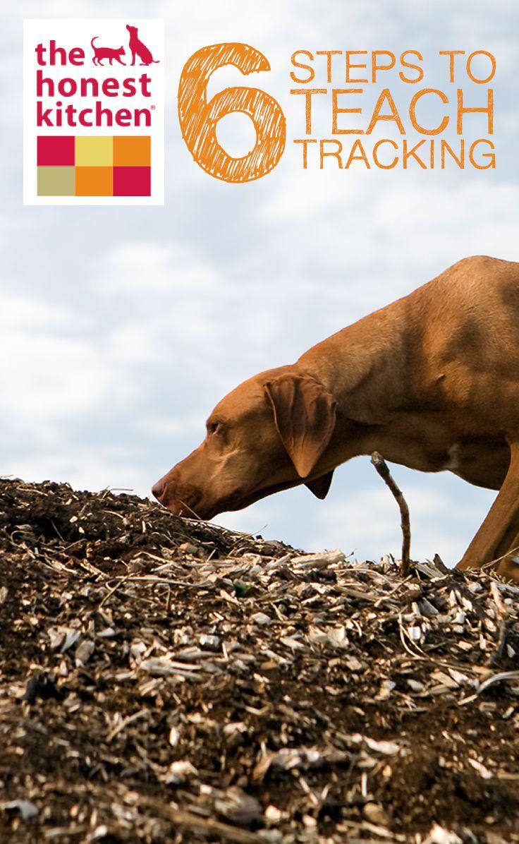 6 Steps To Teach Tracking Dog Training Training Your Dog