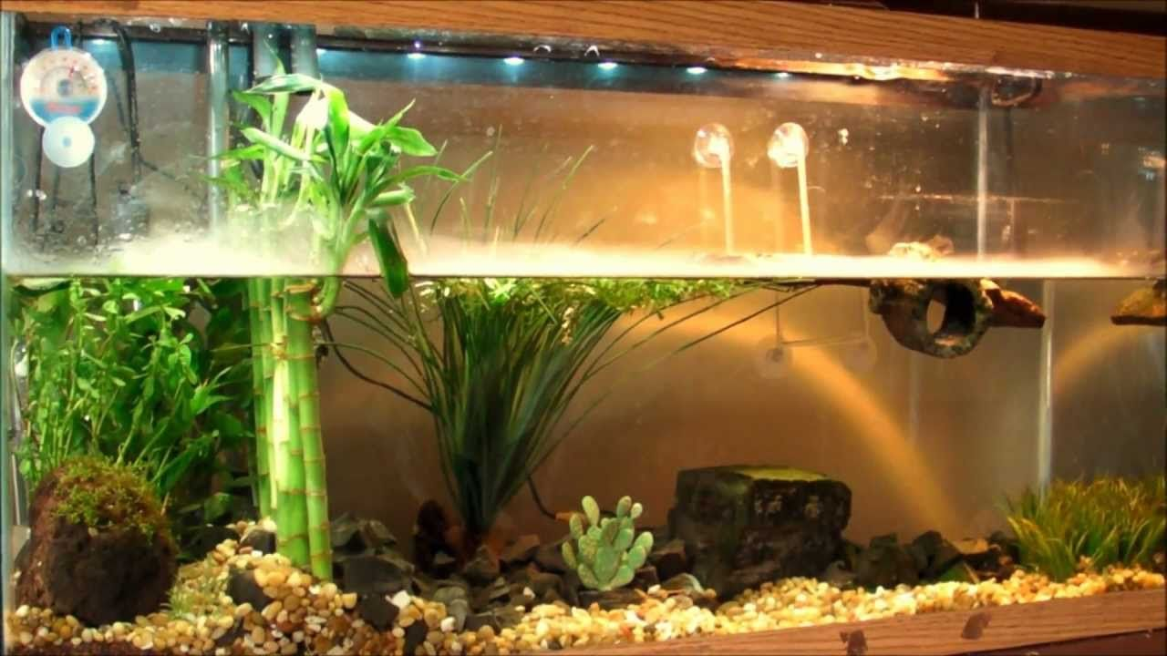 """Planted Turtle Tank """"Red Ear Slider"""" (RES) with home made"""