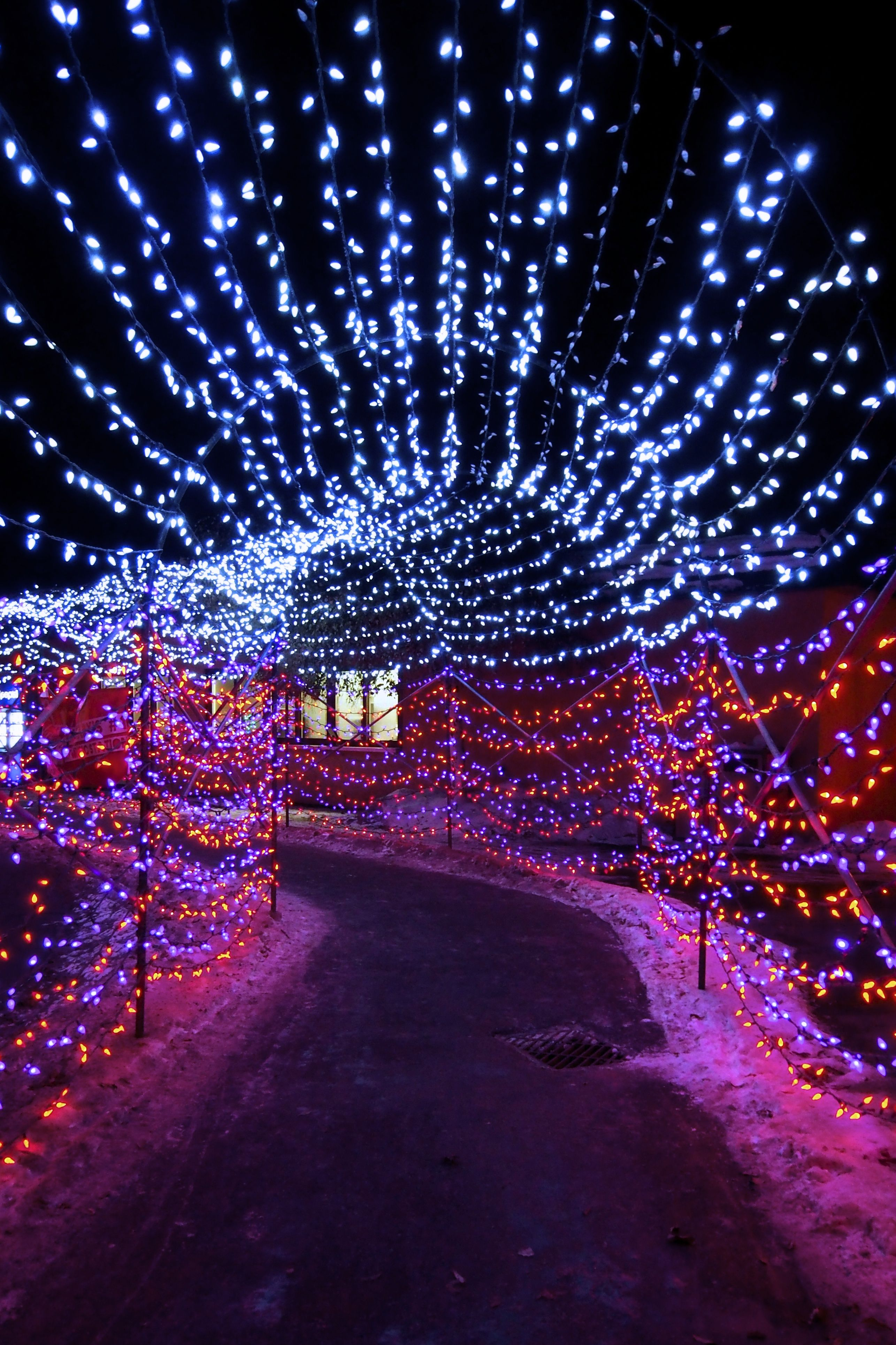 Calgary Zoo Christmas Lights