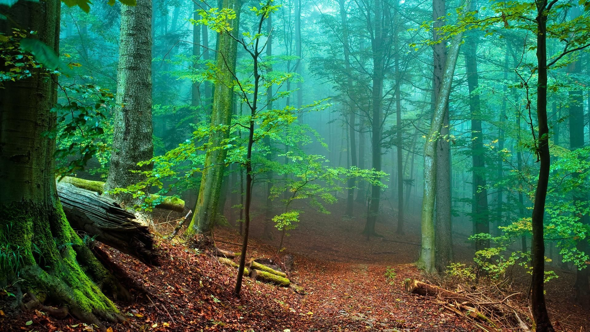 nature trees forest woods magic wallpaper 1920×1080 1080p widescreennature trees forest woods magic wallpaper 1920×1080 1080p widescreen