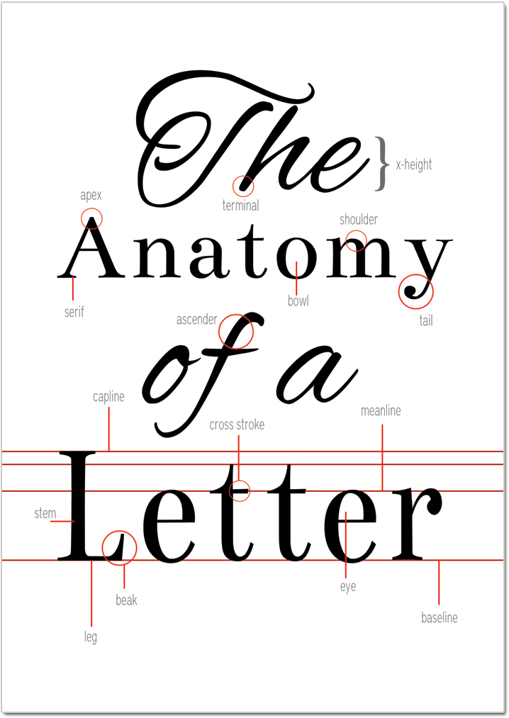 The Anatomy Of A Letter Free Typography Printable On Crafting