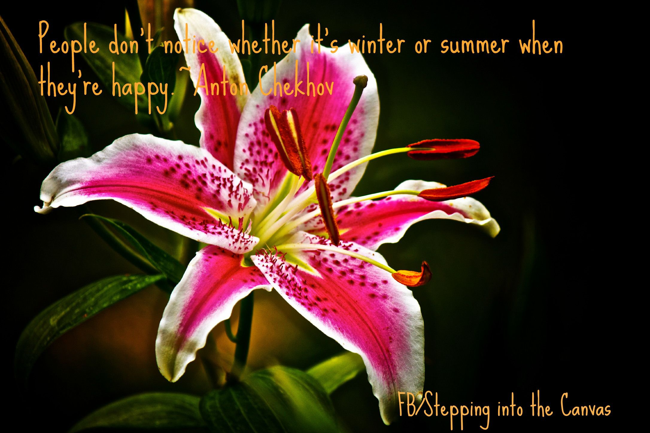 Whether It's Winter or Summer (With images) Lily flower