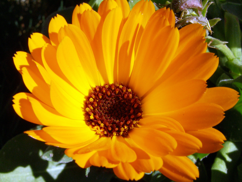 Flores, Flores De