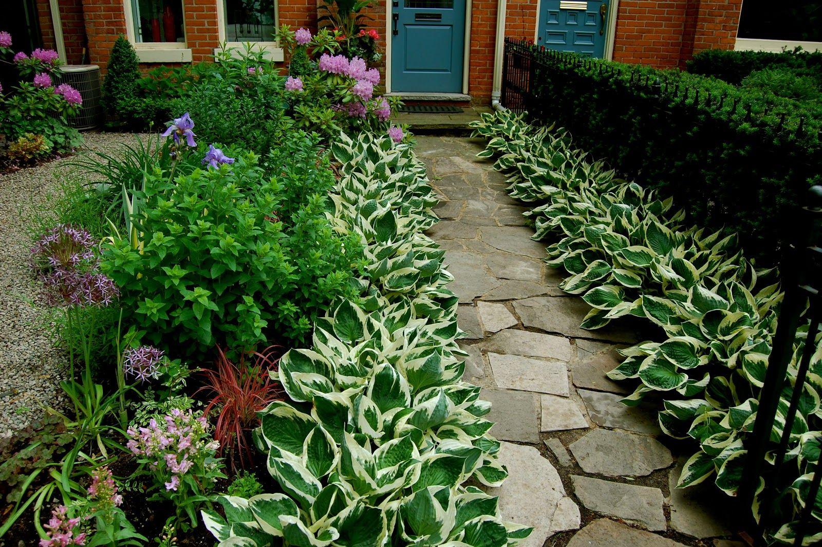 Border Plants Google Search Garden Design Plants 640 x 480