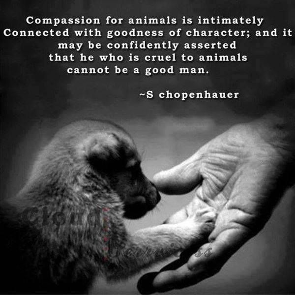 Animal Rights Quotes Best Compassion For Animals The Only Way To Live Animals