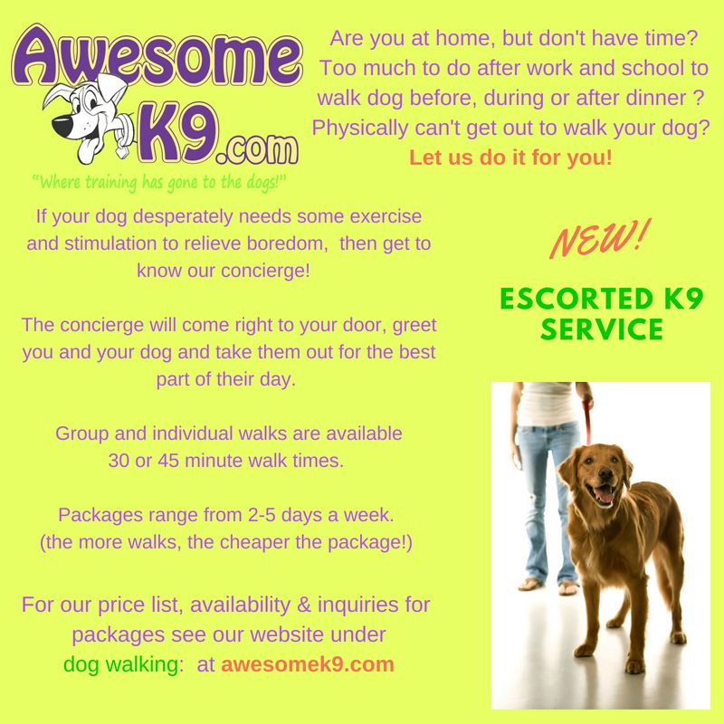 New Escorted K9 Service Let Us Walk Your Dog Dog Psychology