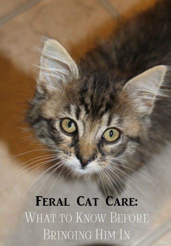 Caring for a Feral Cat What to Know Before Bringing Him