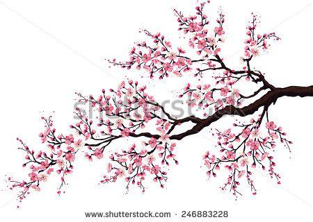 Fleurs de cerisier japonais images gratuites sur pixabay 3 my life cherry blossom - Dessin arbre japonais ...