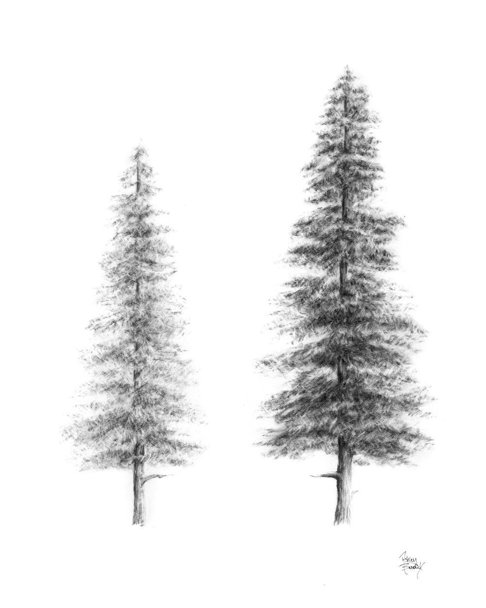 Evergreen Trees Original Design Hand Drawn Two Pine Trees By