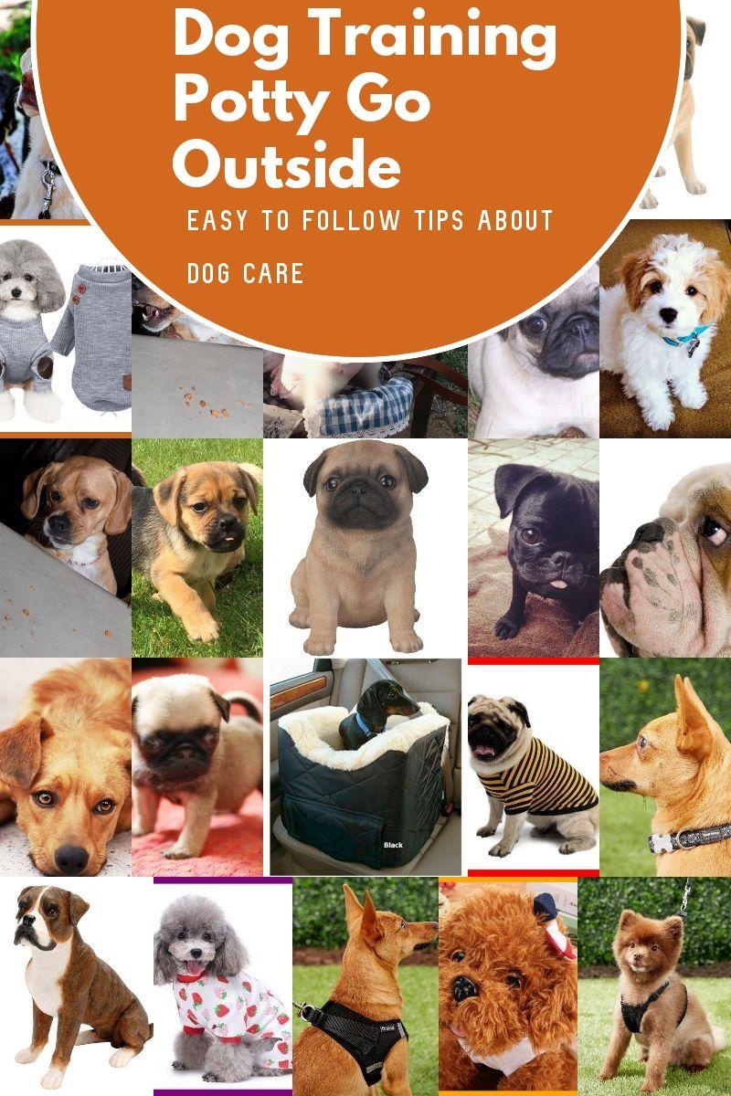 Basic Dog Training Potty Go Outside Dog Training Dog Potty Training Basic Dog Training