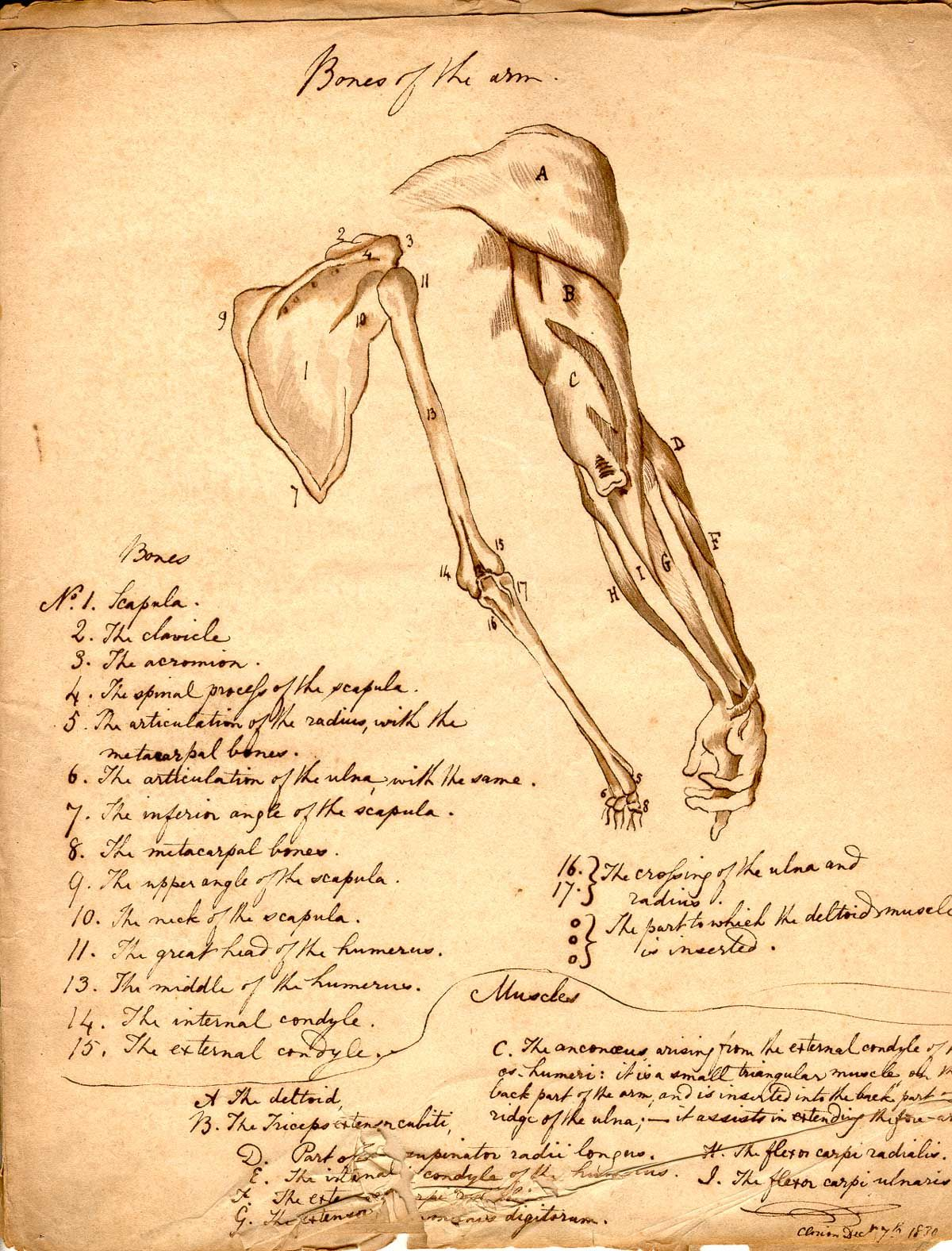 More Anatomical Imagery From The U S National Library Of Medicine S Archives This Image Plays The Role Of Victor Frankenstein Anatomy Frankenstein Halloween